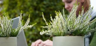 Tips bij het aanleggen van je tuin