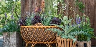 Vaste planten in pot
