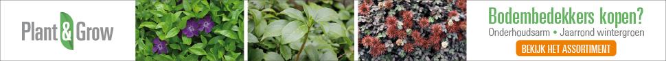 Bodembedekker kopen Plant & Grow